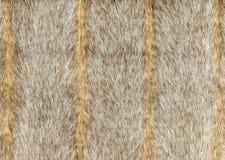 Γκρίζα γούνα faux με τα κάθετα λωρίδες στοκ φωτογραφία με δικαίωμα ελεύθερης χρήσης