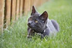 Γκρίζα εσωτερική σύντομη συνεδρίαση γατακιών τρίχας στη χλόη Στοκ φωτογραφίες με δικαίωμα ελεύθερης χρήσης