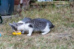 Γκρίζα και άσπρα γατάκια στον κήπο στοκ φωτογραφίες