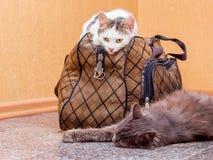 Γκρίζα και άσπρη γάτα με τη βαλίτσα Αναμονή το τραίνο στο σταθμό τρένου Επιβάτες με μια βαλίτσα ενώ traveling_ στοκ φωτογραφία