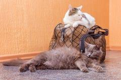 Γκρίζα και άσπρη γάτα με τη βαλίτσα Αναμονή το τραίνο στο σταθμό τρένου Επιβάτες με μια βαλίτσα ενώ traveling_ στοκ φωτογραφία με δικαίωμα ελεύθερης χρήσης