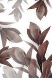 Γκρίζα και καφετιά φύλλα στους κλαδίσκους Στοκ Εικόνες
