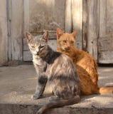 Γκρίζα και κόκκινη γάτα Στοκ εικόνα με δικαίωμα ελεύθερης χρήσης