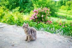 Γκρίζα κοντή γάτα οδών τρίχας που βρίσκεται στη σκιά των θάμνων στοκ φωτογραφία