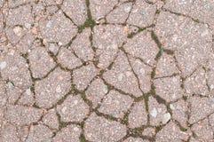 Γκρίζα μικρή άσφαλτος με το πράσινο βρύο Στοκ Φωτογραφίες