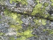 Γκρίζα πέτρα με τα πράσινα σημεία Στοκ Φωτογραφίες