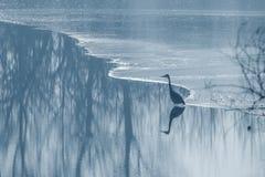 Γκρίζα παγωμένη ερωδιός λίμνη στο χειμώνα Σκηνή χειμερινών λιμνών στοκ φωτογραφία με δικαίωμα ελεύθερης χρήσης