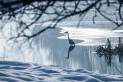 Γκρίζα παγωμένη ερωδιός λίμνη στο χειμώνα Σκηνή χειμερινών λιμνών στοκ φωτογραφίες με δικαίωμα ελεύθερης χρήσης
