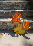 Γκρίζα παλαιά σκαλοπάτια με το όμορφο ξηρό teak φύλλο στο πάτωμα με την καταπληκτική σκιά, την ποιητική σκηνή και το καλλιτεχνικό Στοκ Φωτογραφίες