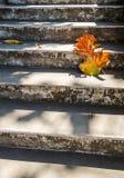 Γκρίζα παλαιά σκαλοπάτια με το όμορφο ξηρό teak φύλλο στο πάτωμα με την καταπληκτική σκιά, την ποιητική σκηνή και το καλλιτεχνικό Στοκ Εικόνα