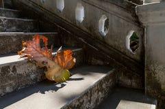 Γκρίζα παλαιά σκαλοπάτια με το όμορφο ξηρό teak φύλλο στο πάτωμα με την καταπληκτική σκιά, την ποιητική σκηνή και το καλλιτεχνικό Στοκ Φωτογραφία