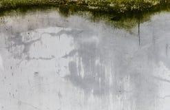 Γκρίζα ραγισμένη σύσταση τοίχων με το πράσινο βρύο, ρύπος και λεκέδες ηλικίας τοίχος τσιμέντο&upsilon Στοκ φωτογραφία με δικαίωμα ελεύθερης χρήσης