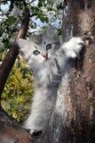 Γατάκι σε ένα δέντρο Στοκ Εικόνα