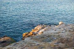 Γκρίζα σφραγίδα, επίσης γνωστή ως ατλαντική σφραγίδα Στοκ φωτογραφία με δικαίωμα ελεύθερης χρήσης