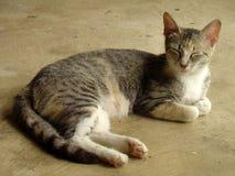 Γκρίζα τιγρέ γάτα μαμών που στηρίζεται στο Μισισιπή Στοκ Φωτογραφίες