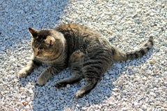 Γκρίζα τιγρέ γάτα που βρίσκεται στο αμμοχάλικο στον ήλιο στοκ φωτογραφία
