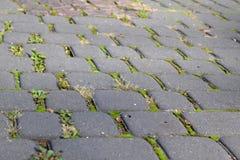 Γκρίζα τούβλα πεζοδρομίων με το πράσινο βρύο Στοκ Εικόνα