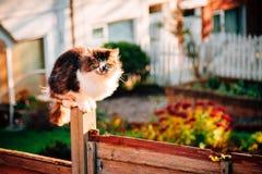 Γκρίζα χνουδωτή έννοια της Pet γατών Στοκ φωτογραφίες με δικαίωμα ελεύθερης χρήσης