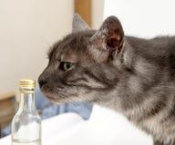 Γκρίζες εσωτερικές χημικές ουσίες μυρωδιών γατών Στοκ εικόνες με δικαίωμα ελεύθερης χρήσης