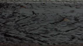 Γκρίζες λακκούβες νερού οδών κάτω από τις πτώσεις μιας δυνατής βροχής το καλοκαίρι φιλμ μικρού μήκους