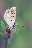 Γκρίζος-άσπρη πεταλούδα με τα σημεία Στοκ φωτογραφία με δικαίωμα ελεύθερης χρήσης