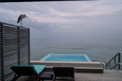 Γκρίζος ερωδιός, λίμνη απείρου και δύο καρέκλες γεφυρών στο πεζούλι του μπανγκαλόου νερού στις Μαλδίβες στην ανατολή στοκ φωτογραφίες