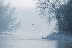 Γκρίζος ερωδιός που πετά πέρα από μια παγωμένη λίμνη, παγωμένη χειμώνας λίμνη στοκ φωτογραφίες με δικαίωμα ελεύθερης χρήσης