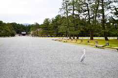 Γκρίζος ερωδιός στον κήπο του Κιότο Gyoen, Κιότο Στοκ Εικόνα