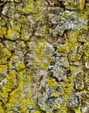 Γκρίζος και καφετής φλοιός δέντρων Στοκ φωτογραφίες με δικαίωμα ελεύθερης χρήσης
