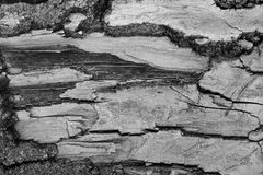 Γκρίζος και μαύρος φλοιός δέντρων Στοκ Φωτογραφίες