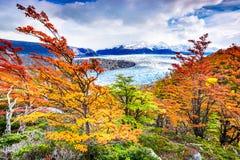 Γκρίζος παγετώνας, Παταγωνία, Χιλή Στοκ φωτογραφίες με δικαίωμα ελεύθερης χρήσης