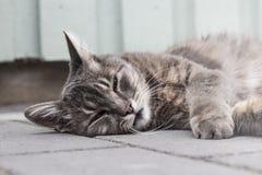 Γκρίζος ύπνος γατών έξω μια θερινή ημέρα Στοκ φωτογραφία με δικαίωμα ελεύθερης χρήσης