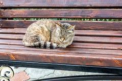 Γκρίζος ύπνος γατών στον ξύλινο πάγκο Στοκ φωτογραφία με δικαίωμα ελεύθερης χρήσης