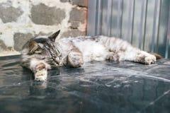 Γκρίζος ύπνος γατών Στοκ Φωτογραφία