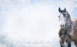 Γκρίζο άλογο στο χειμερινό τοπίο με το χιόνι, έμβλημα Στοκ Φωτογραφία