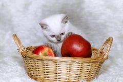 Γκρίζο γατάκι με τα κόκκινα μήλα Στοκ Εικόνες