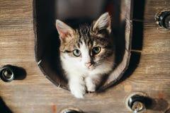 Γκρίζο γατάκι στο λευκό Στοκ Φωτογραφία