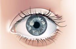 Γκρίζο μάτι - απεικόνιση Στοκ Εικόνες