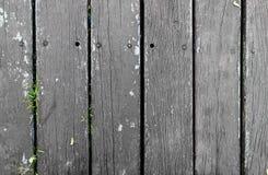 Γκρίζο ξύλινο πάτωμα με την πράσινη χλόη από κάτω από Στοκ εικόνες με δικαίωμα ελεύθερης χρήσης