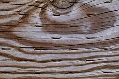 Γκρίζο ξύλο Στοκ Φωτογραφία