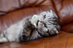 Γκρίζο παιχνίδι γατών με τα παιχνίδια γατών Στοκ φωτογραφία με δικαίωμα ελεύθερης χρήσης
