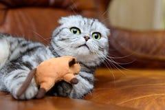 Γκρίζο παιχνίδι γατών με τα παιχνίδια γατών Στοκ Φωτογραφίες