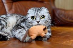 Γκρίζο παιχνίδι γατών με τα παιχνίδια γατών Στοκ εικόνα με δικαίωμα ελεύθερης χρήσης