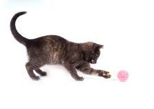 γκρίζο παιχνίδι παιχνιδιού γατακιών Στοκ Εικόνες
