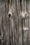 γκρίζο παλαιό δάσος σύστα στοκ εικόνα με δικαίωμα ελεύθερης χρήσης