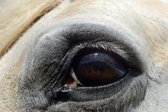 Γκρίζο στενό επάνω πορτρέτο ματιών αλόγων Στοκ φωτογραφία με δικαίωμα ελεύθερης χρήσης