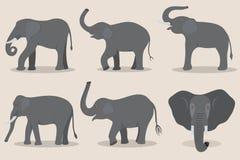 Γκρίζο σύνολο ελεφάντων διανυσματική απεικόνιση