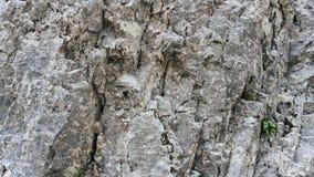 Γκρίζο υπόβαθρο σύστασης πετρών Στοκ Εικόνες