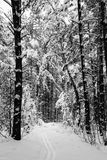 Γκρίζο χειμερινό τοπίο Στοκ φωτογραφία με δικαίωμα ελεύθερης χρήσης