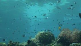Γκρίζο Gold Coast Queensland Αυστραλία καρχαριών σκοπέλων φιλμ μικρού μήκους